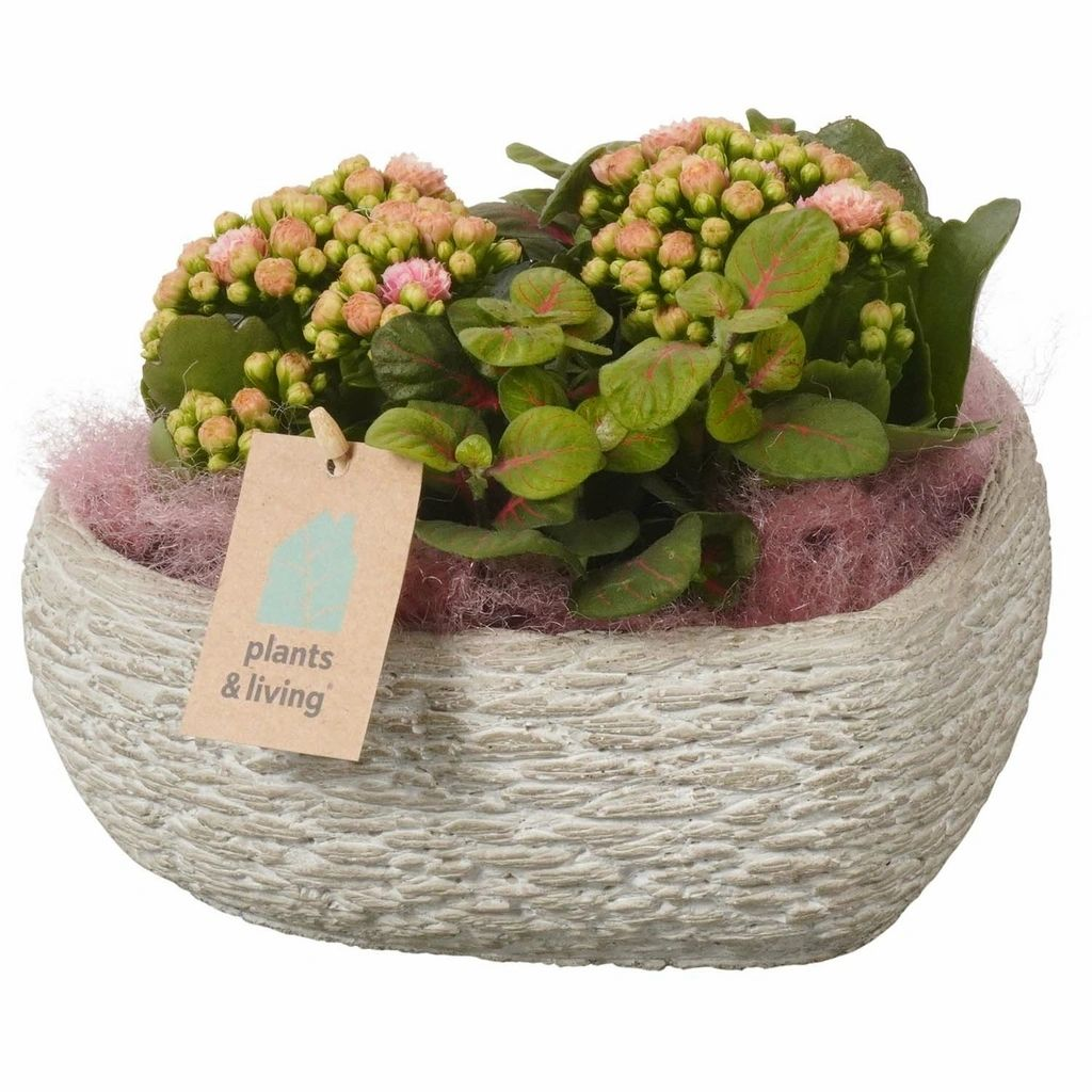 Plantenarrangement Bertine | 22 cm