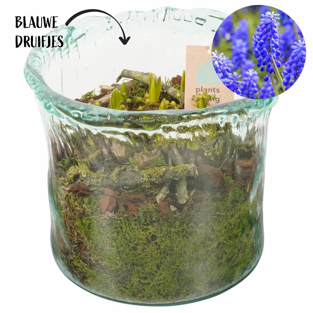 Plantenarrangement Dina | 18 cm