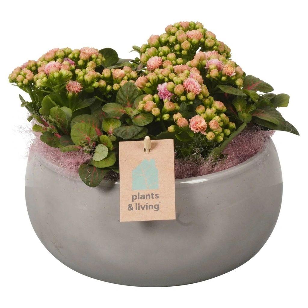 Plantenarrangement Hanneke | 20 cm